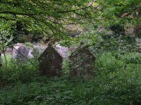 Nature begins to claim some of the gravestones at the Rosary Cemetery. Picture: Siofra Connor